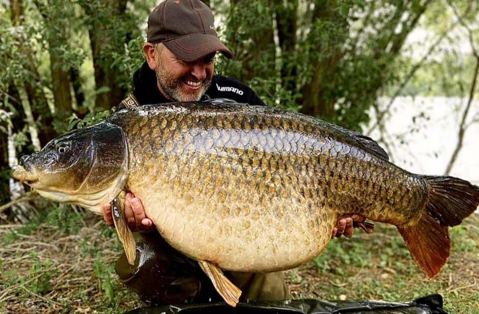 Bluebell Swan Lake Carp